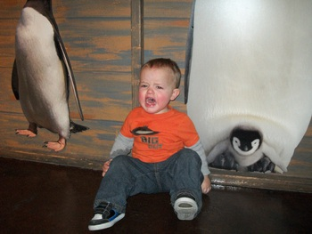 Screaming by the penguins
