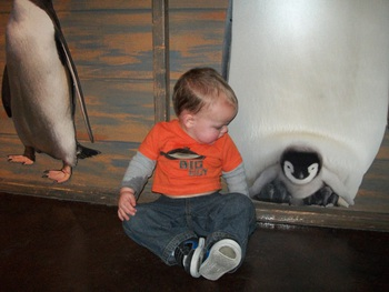 Looking at baby penguin